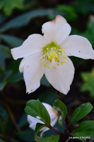 fleurs décembre,décos sapin,Julie 041.JPG