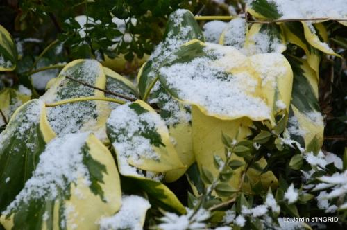 oiseaux première neige 052.JPG