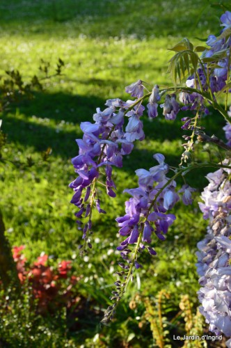 Ciron,pivoine,escargot,jardin,ancolie,glycine 214.JPG