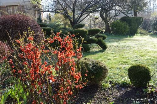 bouquet mamy,jacinthes,semis,jardin 045.JPG