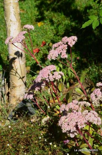 jardin ,bouquet 016.JPG