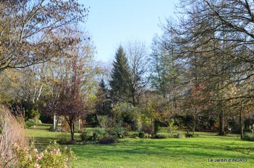 oiseaux,travaux,arbustes,les dernières fleurs 065.JPG