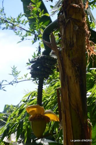 bambous Roque Gageac,jardin,bouquet 146.JPG