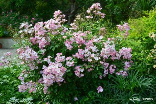 roses,visiteuses,Sophie 007.JPG