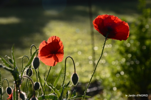 fleurs du jardin 046.JPG