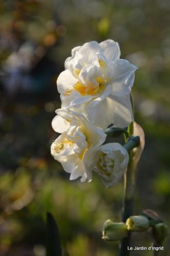 orchidée,puces à Creysse,jardin 041.JPG