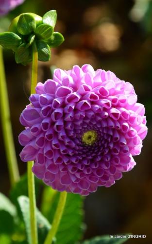 dahlias,jardin,puces st Avit Seigneur,Paniers Issigeac,Romane 057.JPG