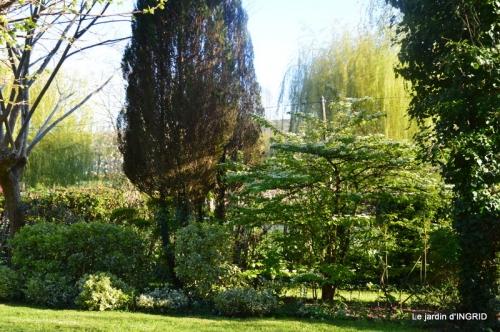 jardin confiné ,osier,magnolia jaune 165.JPG
