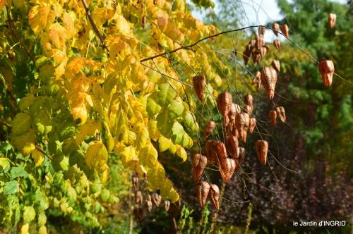 jardin automne,voisinage,canal 031.JPG