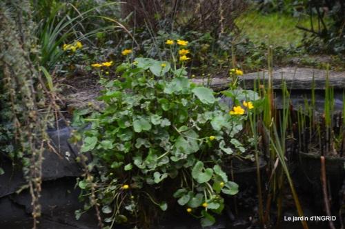 semis,bassin,tour du jardin 072.JPG