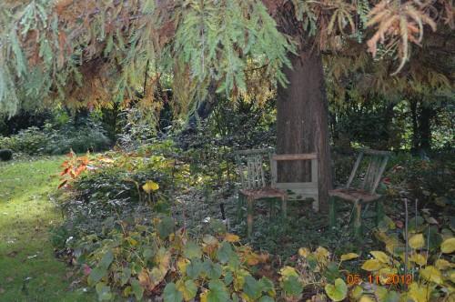 Ciron,feuilles d'automne,safran,taille érable 092.JPG