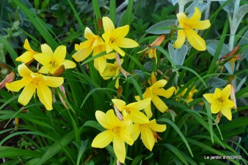roses,jardin,Le Fleix,bleu 098.JPG