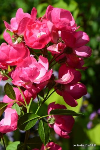 jardin pour l'automne,affiche vide jardin 097.JPG