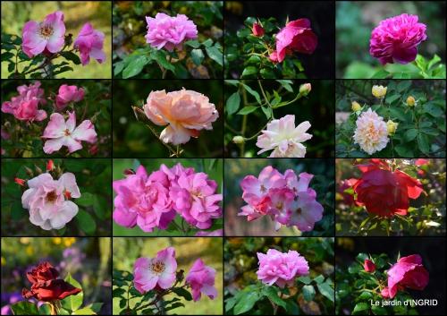 2015-10-01 jardin Mme Perichou,grandes fleurs,bouquet,jardin2.jpg