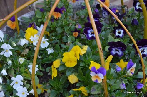 tour du jardin printemps 029.JPG