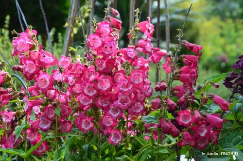 jardin pluie,Inès,Bébés cygnes,bouquet,canal 027.JPG