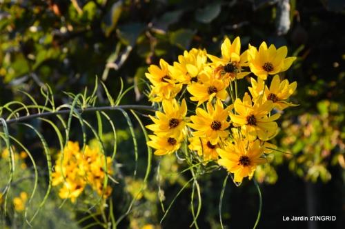 jardin Mme Perichou,grandes fleurs,bouquet,jardin 053.JPG