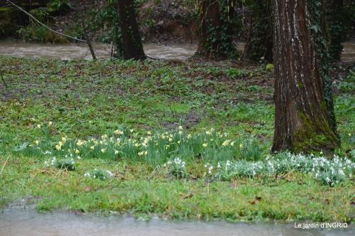 bulbes,perce neige,narcisse,pluie,hélébore,chapelle 151.jpg