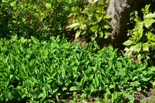 colline,orchidée,nature,jardin fleuri 039.JPG