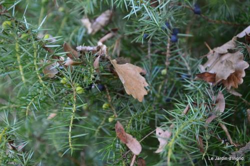 troncs,automne,vieilles photos 039.JPG