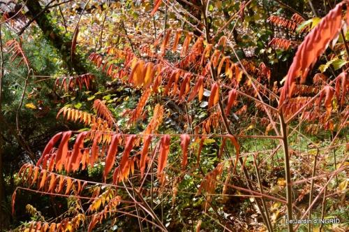 les arbres en automne,cabane 097.JPG