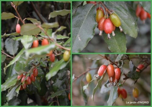 2016-01-24 oiseaux cacaouettes gouttes,petits fruits1.jpg