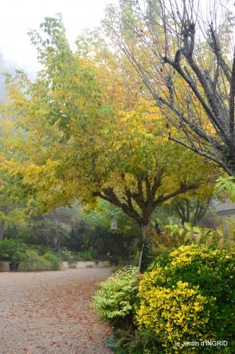 brouillard le matin d'automne 032.JPG