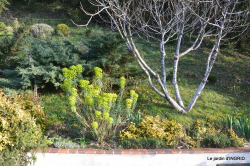 saumon,paquerettes,jardin blanc 046.JPG