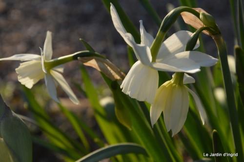 orchidée,puces à Creysse,jardin 039.JPG