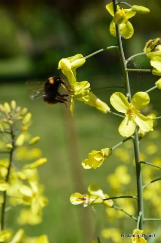 mésanges,escargots,ros. de banks,abeilles,Monpazier,Banes,Forêt 137.JPG