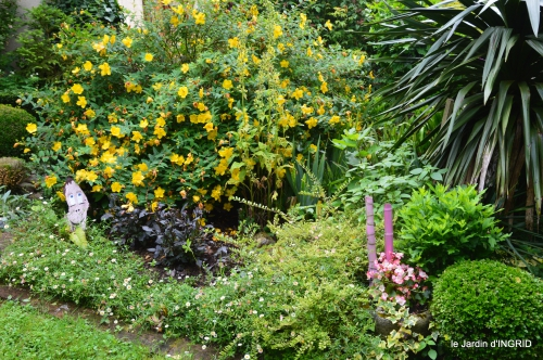 jardin pluie,Inès,Bébés cygnes,bouquet,canal 042.JPG