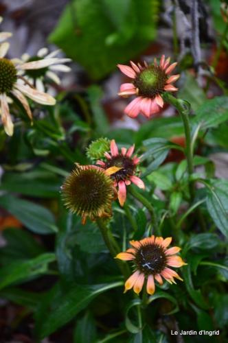 travaux,érable rouge,abeilles,Monpazier,jardin 019.JPG