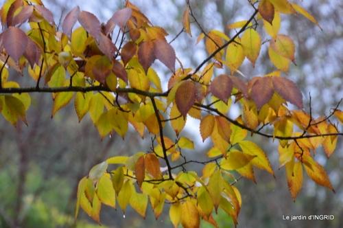 Brouillard,cypres chauve,jardinage 054.JPG