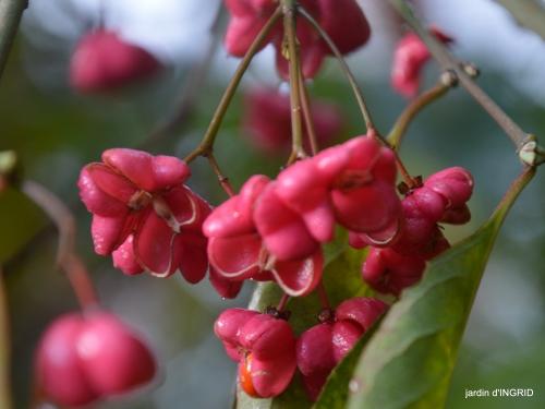 couleurs d'automne,bouquet,lune 103.JPG