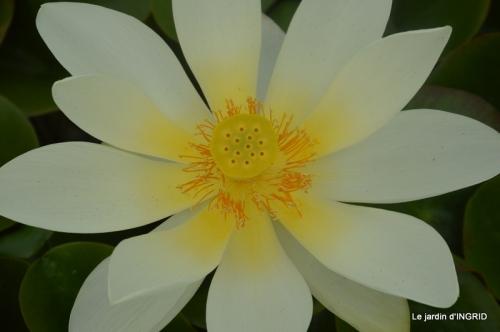 orage,puces,bouquet,Anniv.Ines,Brantome,Jardins d'eau 297.JPG