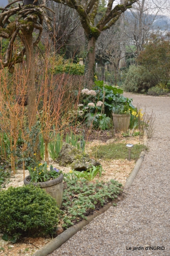 paillage,primevères,jonquilles,jardin 035.JPG