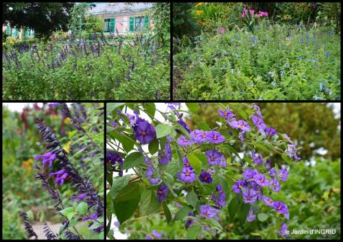 2016-09-13 bouquet,jardin de Monet,les vaches,Pourville sur mer11.jpg