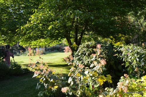 jardin,asters,fleurs blanches,chatte,rosiers roses 058.JPG