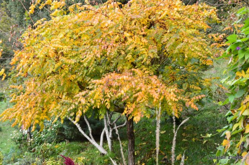 automne,arbres,inondation 080.JPG