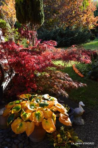les arbres en automne,cabane 058.JPG
