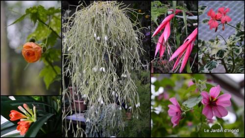 2014-03-28 jardin ,cane sauvage,paquerettes,tulipes2.jpg