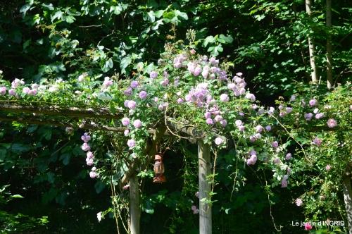 cygnes,Sophie,jardin en mai 022.JPG