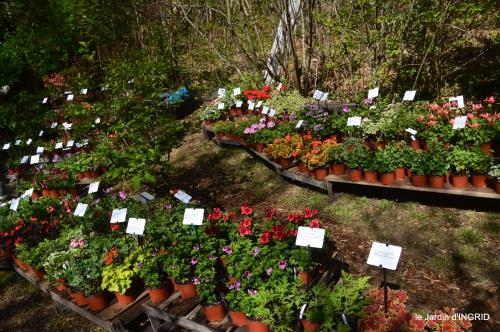 coquelicots,fête des fleurs Lalinde,fouleix,jardinage 135.JPG