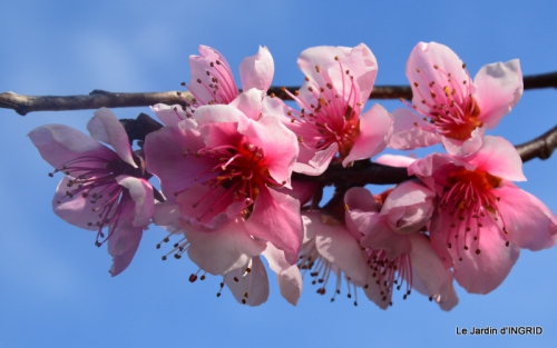 jardin printemps 065.JPG
