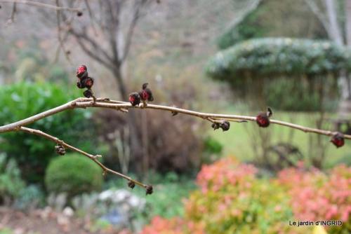 jardin d'hiver 045.JPG