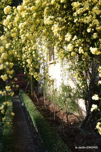 iris,clématite,Max,osier,premieres roses 086.JPG