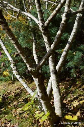 les arbres en automne,cabane 105.JPG