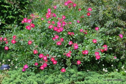 fête de la fraise Vergt,roses jardin 171.JPG