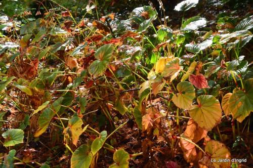 automne,arbres,inondation 095.JPG