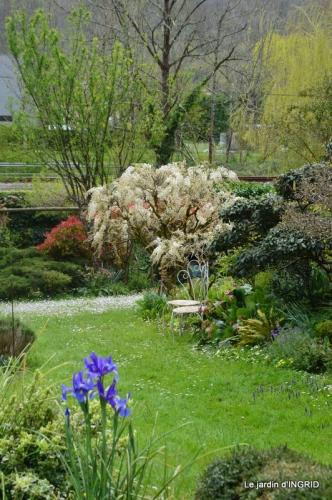 jardin confiné ,osier,magnolia jaune 074.JPG